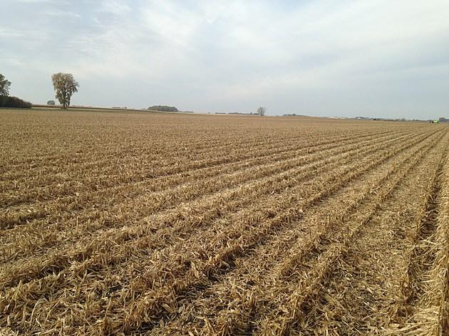combined corn field